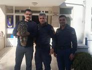 Yaralı Baykuş'a Jandarma Sahip Çıktı